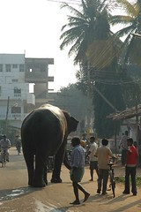 Elephant on the street (Tumkur Ameen) Tags: india elephant nature forest landscape nationalpark wildlife western environment karnataka mammals ahmed coorg kabini begur ghats nilgiris kunigal wildlifesanctuary ameen kodagu bandipur bisle tumkur nagarahole talakaveri kakanakote makutta karapura antharasanthe antarasanthe hediyala hghills brahmagiris ddhills hebbur elephantbathing