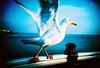 Kehaar (lomokev) Tags: blue sea sky bird water animal top20favorites pier lomo lca xpro lomography crossprocessed xprocess top20animalpix brighton seagull lomolca r agfa jessops100asaslidefilm agfaprecisa watershipdown lomograph brightonpier agfaprecisa100 palacepier cruzando top20xpro precisa kehaar deletetag jessopsslidefilm rota:type=showall rota:type=composition rota:type=happyaccidents rota:type=movement use:on=moo file:name=lomo0306a24