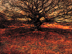 . This Is Not Here . (3amfromkyoto) Tags: uk shadow red england orange tree english leaves yellow landscape this is leaf suffolk oak shadows branches 2006 here single april lone british thisisnothere 3amfromkyoto flickr:user=3amfromkyoto