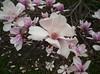 Steel Magnolias?