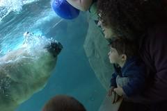 CRW_8958 (jetrotz) Tags: zoo sam amy rochester polarbear ourkids senecaparkzoo