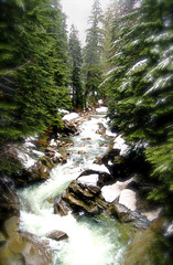 Winter is Trying to Leave (Robert Tilman) Tags: seattle trees winter mountain snow tag3 taggedout creek forest d50 river flow washington spring nikon rocks tag2 tag1 denny snoqualmie raging