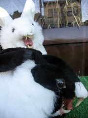Bunnies Gone Wild!