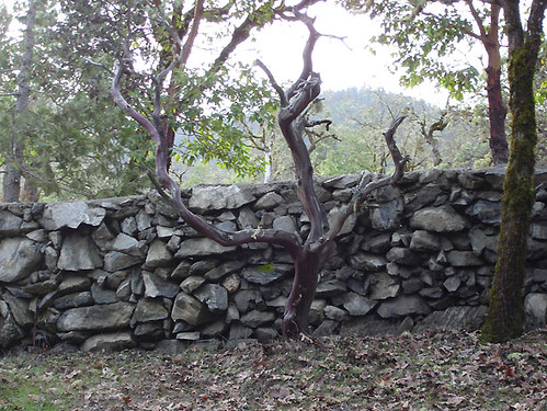 rock fence with tree too