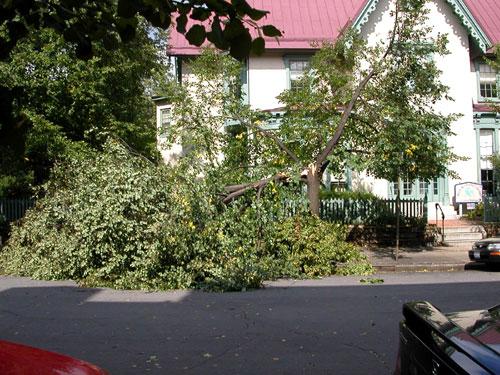 fallen_tree_day