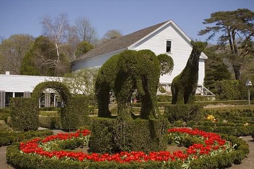 Topiary Circus