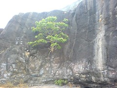 Life in Rocks (khush_sachin) Tags: trip jivdani