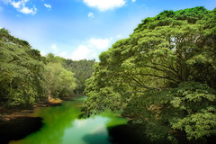 Beautiful River (igorms) Tags: trees sky plants beautiful clouds river branches philippines greens bohol sights hangingbridge