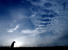 And Still I Wait (See El Photo) Tags: eve sunset shadow sky 15fav dog inspiration beautiful animal delete10 clouds 510fav wow delete9 puppy outside mammal delete5 outdoors delete2 amazing waiting sitting delete6 delete7 awesome great save3 delete8 canine delete3 save7 save8 10f delete delete4 save save2 save9 save4 sit stunning wait save5 save10 save6 savedbythedeltemeuncensoredgroup k9 1000views lovley fourlegs 5f 15f 555v5f 333v3f 222v2f 444v4f 111v1f 45f 777v7f 30f 1520fav 900views 999v9f 20fav 888v8f 50f 666v6f 800v 40f 50favs kakadoochoice kakadooweekpic