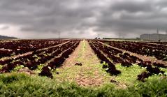 field (edwaado) Tags: hdr pshdr pscla