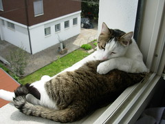 Fusillo fa il bagno sul davanzale! (*DaniGanz*) Tags: white silly cute window cat crazy kitten tabby kitty ledge windowsill gatto bianco micio cutecatphotos davanzale fusillo catsandwindows biancoetigrato tigrato daniganz