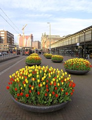 Den Haag Hollands Spoor (Dries Triest) Tags: dutch station tulips thenetherlands tram denhaag railwaystation tulip thehague htm hollandsspoor strijkijzer