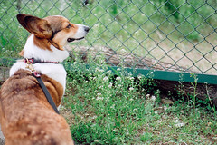 along with life... (moaan) Tags: life dog joy 2006 contaxg1 inlife gettyimagesjapanq1 gettyimagesjapanq2