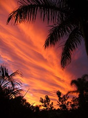 Tropical Sunset (Megasaxon) Tags: sunset sky orange sun clouds catchycolors dusk australia brisbane palm tropical tropics brisbaneaustralia catchycolorsorange tropicalsunset
