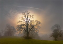 misty sunrise (adrians_art) Tags: trees light red england sky orange sun mist topf25 weather yellow misty fog tag3 taggedout clouds sunrise dark geotagged dawn landscapes kent bravo tag2 tag1 shadows 500v20f foggy naturesfinest geotags 1000v40f fivestarsgallery anawesomeshot aplusphoto yourwonderland