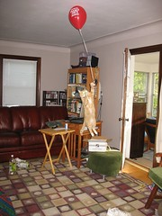 Sat 7:21.46 pm: Up, up, and away with my Trader Joe's balloon... (andrea z) Tags: red cat orangecat god balloon floating fudge traderjoes pete productplacement enrichment airpete petesmyhero abigfave ccc42 portalquest