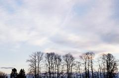 The Sky Over Fraser (elvy) Tags: canada vancouver landscape bc britishcolumbia 35mmslide fujisensia200 pentaxmz5n fraserlands
