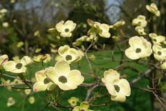 Spring (Dorel) Tags: flowers france green nature spring dof bokeh sceaux sonyr1