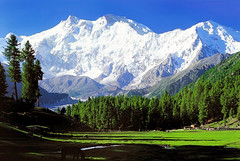 Fairy Meadows (meansmuchtome) Tags: blue trees pakistan white snow green ice beauty pine forest asia meadow meadows glacier huts fairy himalaya nanga parbat specland glaceir
