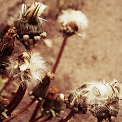 Seed Heads experiment - by 0olong