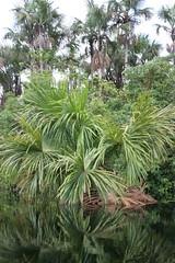 Gabriel creek (~~Steph~~) Tags: nature creek frenchguiana roura