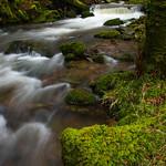 Exmoor - Horner Woods (4)