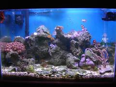 aquarium aqua reef nano aquario nanoreef