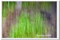 Blur (hk_traveller) Tags: trip travel red vacation color green yellow canon painting photo 300d canon300d australia traveller turbo turbophoto