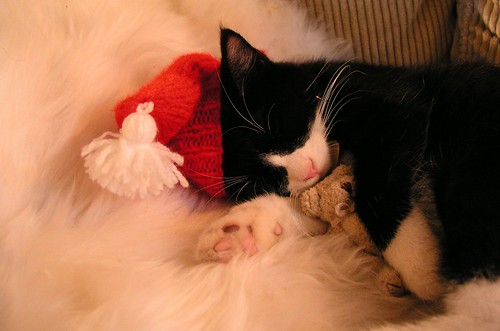 Christmas Sleeping Cat