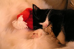 Merry sleepy christmas! (Dr. Hemmert) Tags: christmas sleeping cute hat animal cat nap teddy little sweet kitty purr artemis ivebeencuted