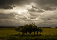 No such thing as dull weather (Ray Byrne) Tags: uk england green field clouds rural canon wow landscape 350d grey countryside bush cloudy unitedkingdom britain country north northumberland hedge canon350d gb morpeth northern northeast landscapephotography raybyrne byrneout