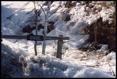 """Please Do Not Pick The Flowers"" (MacSmiley) Tags: trees snow ny nature fence zoo spring loveit 1993 explore funnysign noreaster syracuseny interestingness344 i500 upstatecentralnewyork macsmiley abigfave utatadoubletake"