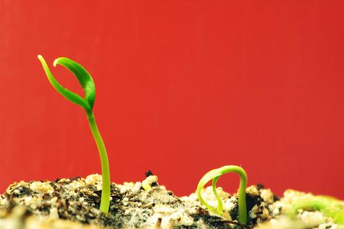 plant waking up