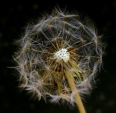 Ball (hotdogg3uk) Tags: flower macro nature topv111 tag3 taggedout wow ilovenature ta