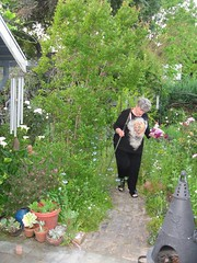 A fistful of sweet peas (cjanebuy) Tags: garden jane pots windchimes succulents clippers chiminea sweetpeas