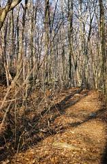 trees (Daniella M. Echeverria) Tags: winter tree fall woods nikon decay connecticut montville nikonf55 f55