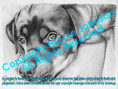 Rotty Drawing (bivoir) Tags: portrait dog pet cute art illustration wow puppy sketch drawing doggy rotweiler rottweiller animalart