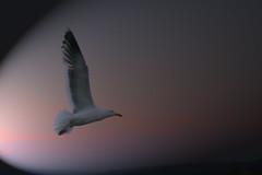 Spotlight on the Gull - by A river runs through