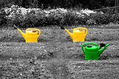 Gathering of the watering cans (Markus Moning) Tags: flowers blackandwhite bw white black flower color colour green water yellow topv111 cutout garden schweiz switzerland wasser gardening swiss blumen can pot gelb desaturation conspiracy gathering sw giessen grn blume schwarzweiss canoneos350d weiss garten schwarz pouring watering ewer moning grtnern recolored valens giesskanne giesskannen verschwrung gschante zusammenkunft wasserkanne