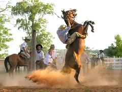 El polvaredal (Eduardo Amorim) Tags: brazil horses horse southamerica brasil caballo cheval caballos cavalos pferde cavalli cavallo cavalo gauchos pferd riograndedosul pampa hest hevonen campanha brsil chevaux gaucho  amricadosul damncool fronteira hst livramento gacho  amriquedusud  gachos  sudamrica suramrica amricadelsur  sdamerika littlestories jineteada   americadelsud santanadolivramento abigfave gineteada superaplus aplusphoto  americameridionale eduardoamorim picswithsoul mastersoflifegallery