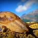 8. Snail in Harijan