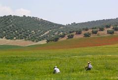 Andalusia (Adfoto) Tags: spain andalusia spanje poppys klaprozen andalusi