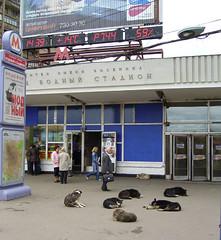 Hunde in Moskau 1 (SebastianBerlin) Tags: moskau 2006 hunde   bahnhof ubahn metro station     mwodnojstadion dogs underground subway eingang entry hund dog