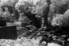 Bridge IR (S a b i r) Tags: bridge bw monochrome ir south d76 infrared 24mm bp karnataka coorg kodakhie kodagu irpufalls southkarnataka