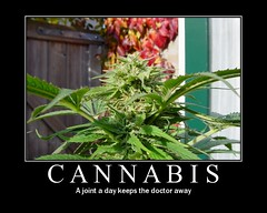 Cannabis, where would we be without it! (Syntax Terror) Tags: weed fdsflickrtoys thc cannabis wiet