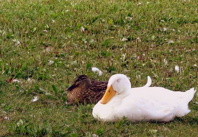 Quiet.  Ducks sleeping.