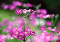 at garden