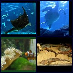 Aquarium Pics (Paula Bird Parent) Tags: fish aquarium fdsflickrtoys nemo stingray turtle lizard clownfish turtles lizards stingrays