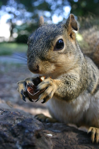 Squirrel with claws by dotpolka on Flickr