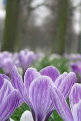 Den Haag Flowers (jremsikjr) Tags: 2005 flowers holland macro canon dof purple thenetherlands lavender denhaag a70